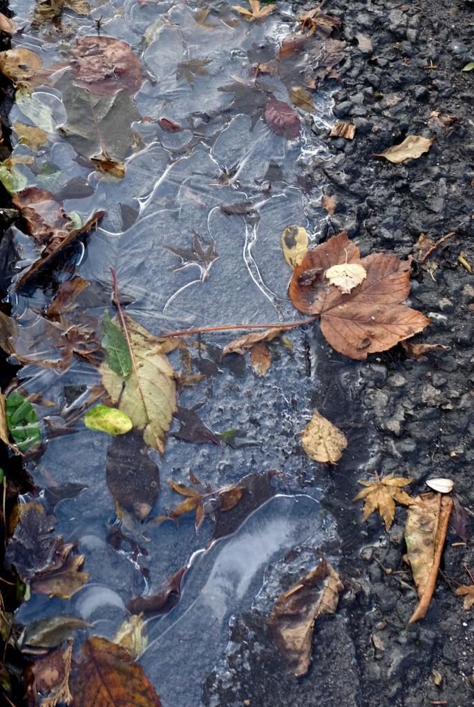 Frosty puddle