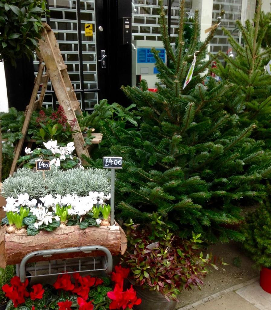 Christmas florist