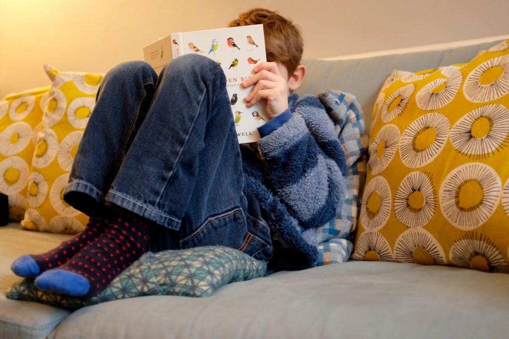 Boy reading on a sofa