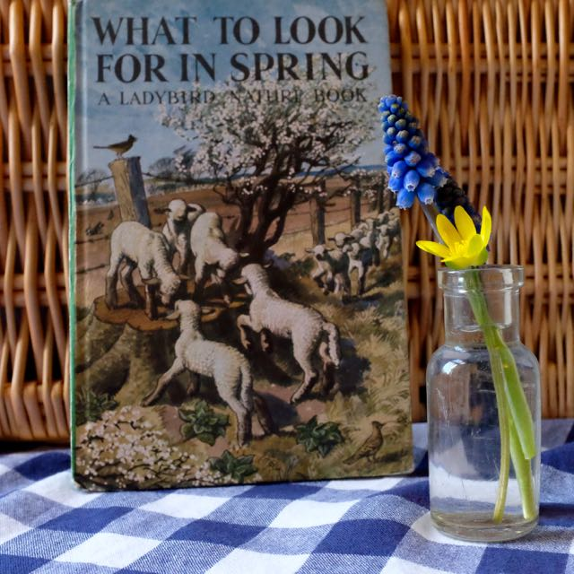 What to Look for in Spring Ladybird book