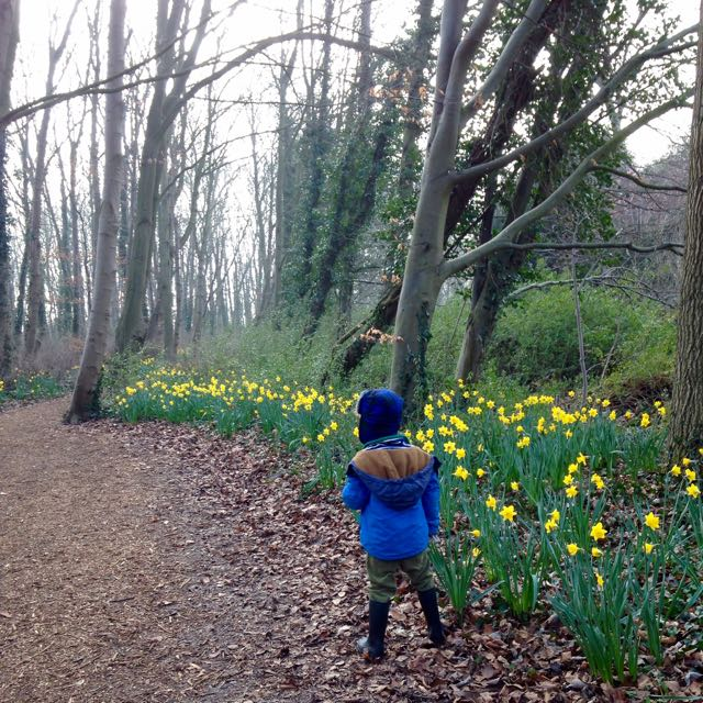 Daffodils at Anglesey Abbey