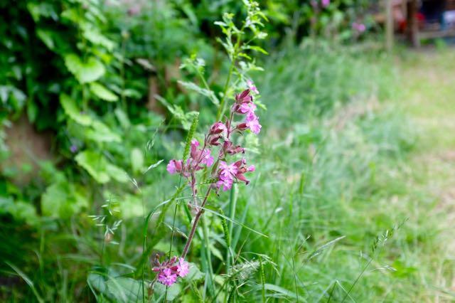 Woodland wildflower meadow