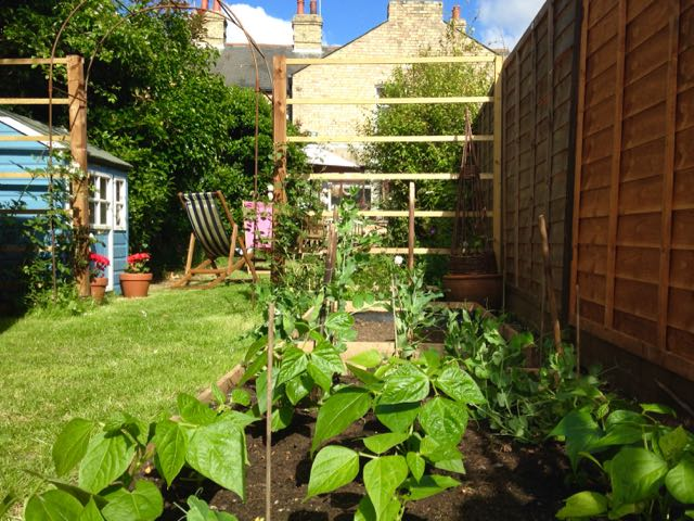 Raised bed with dwarf beans