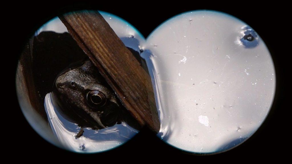 Frogs living in a bucket