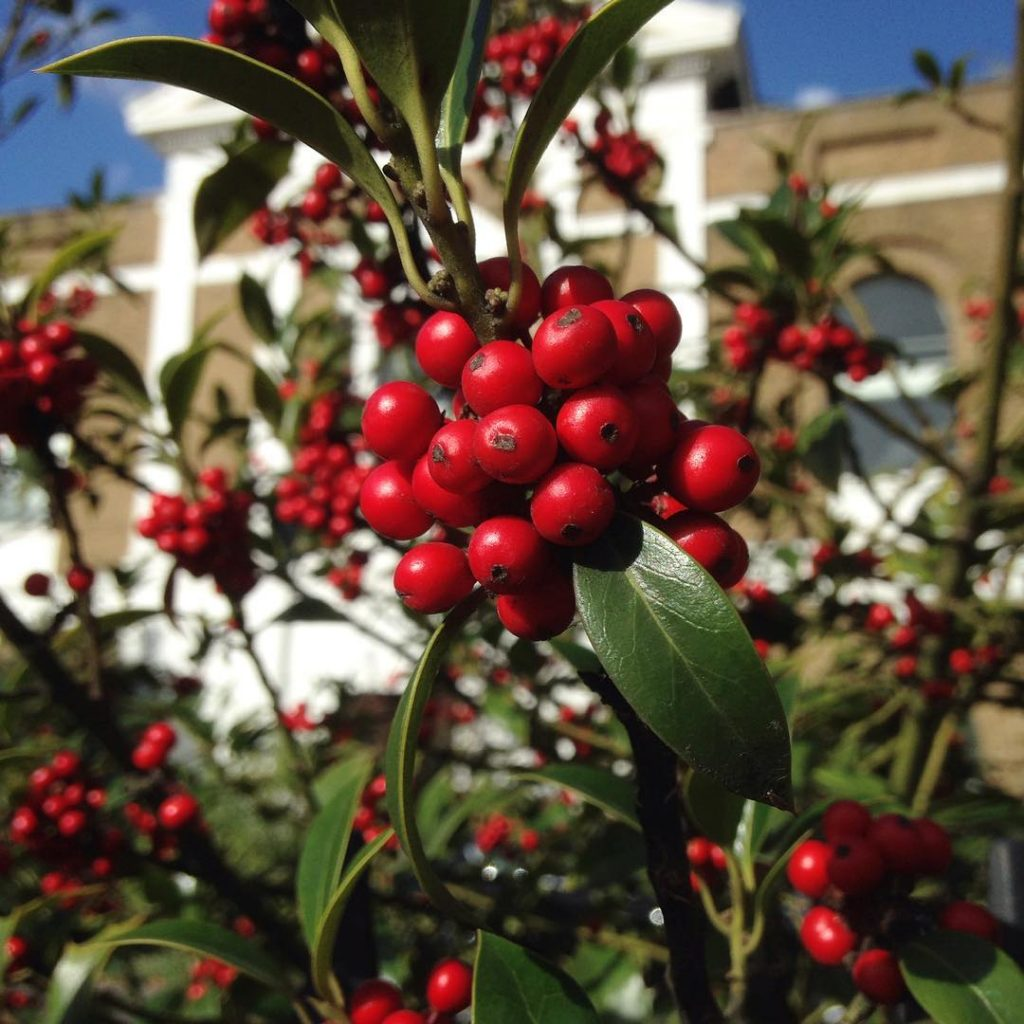 Berries on Pentonville Road