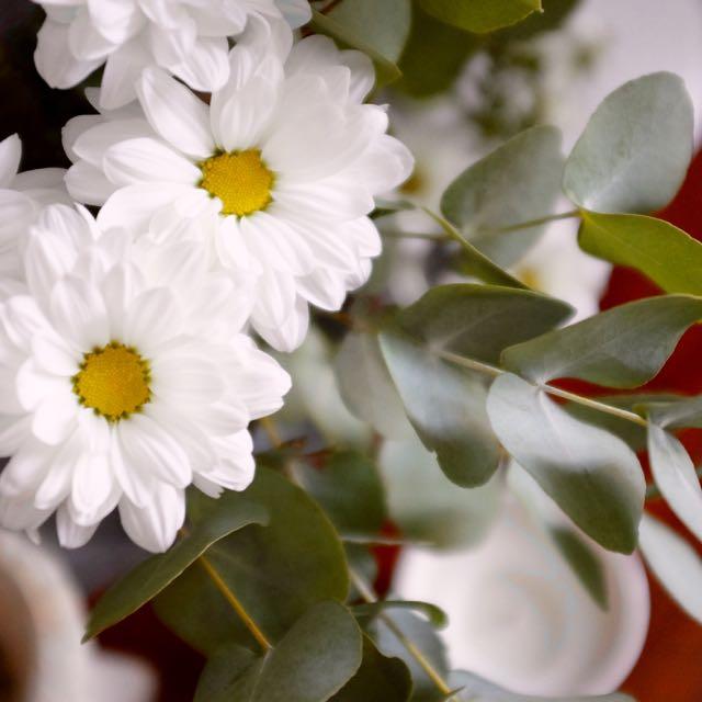 White chrysanthemums and eucalyptus