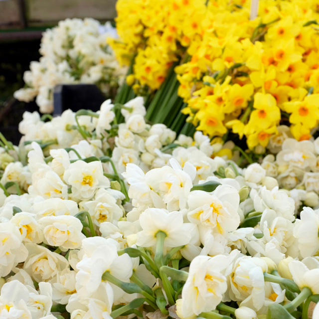Flowers on Ely Market
