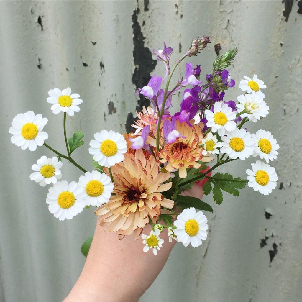 Sarah Raven Flowers