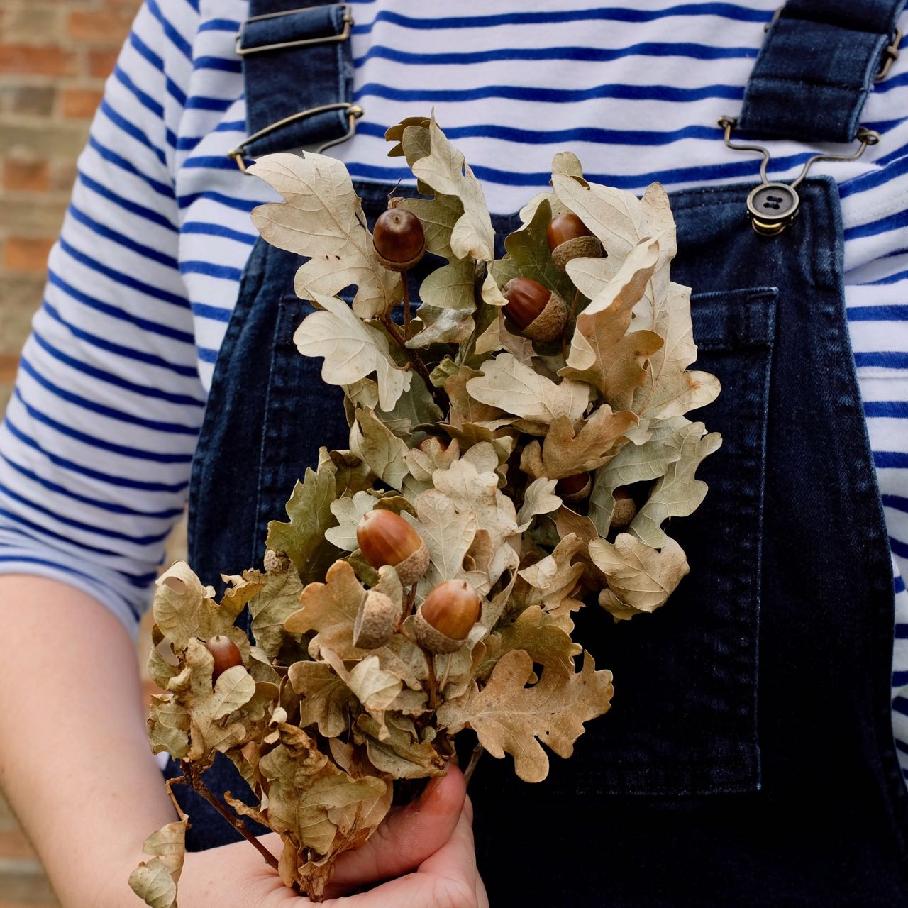 Breton and dungarees, with acorns