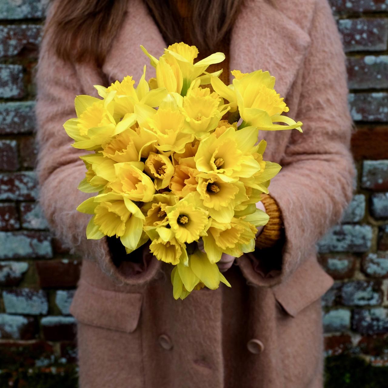 Big bunch of daffodils