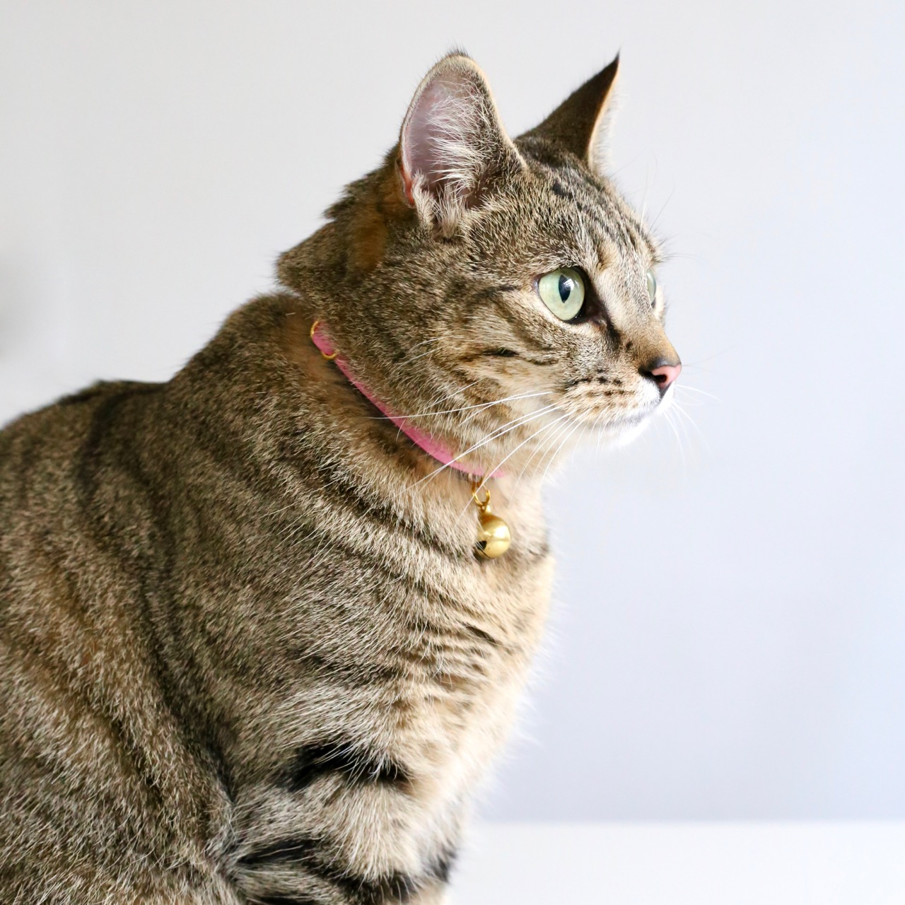 Tabby in her Supakit collar