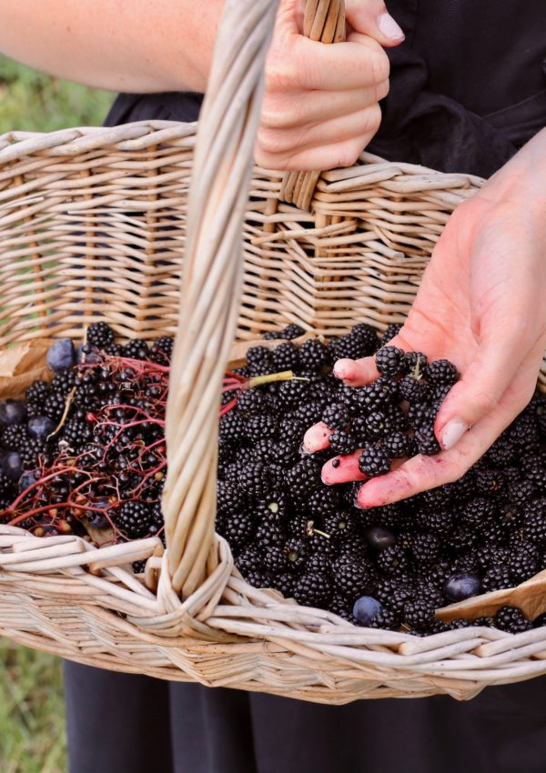 Things to do in September: go blackberry picking